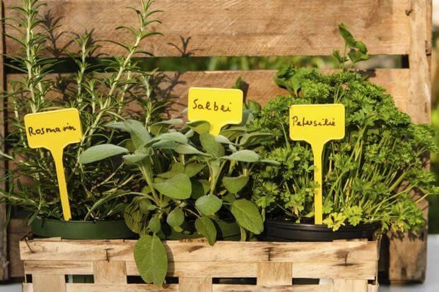herbs-easy-growing