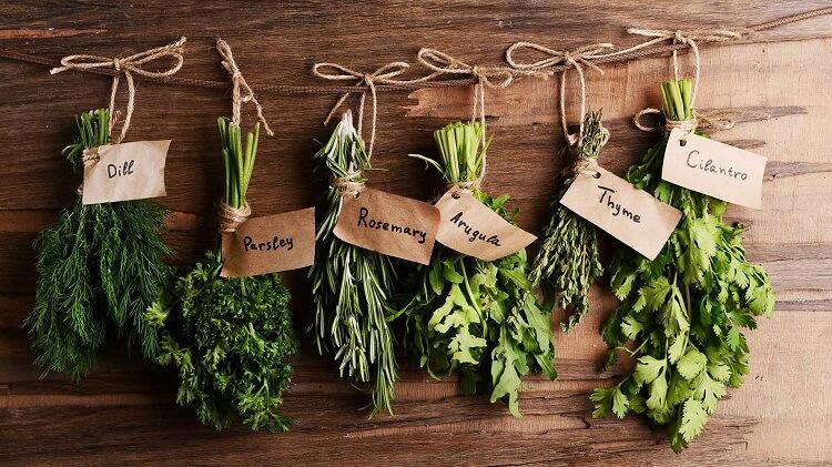 herbs-fresh-green-easy-growing